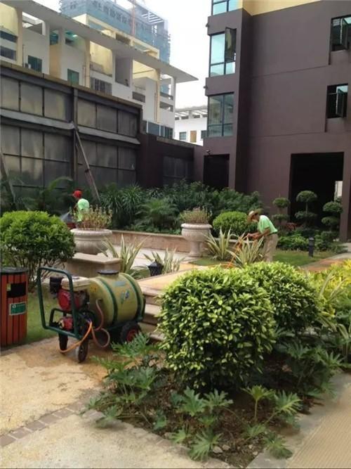 专业灭绿化害虫