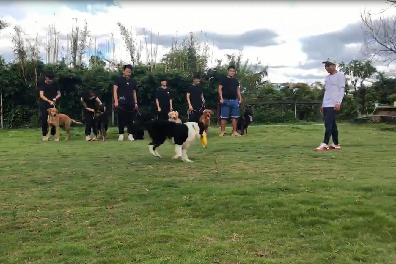 日常训犬训练视频(3)