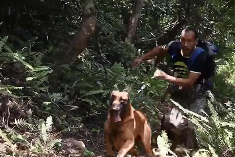 日常训犬训练视频(6)