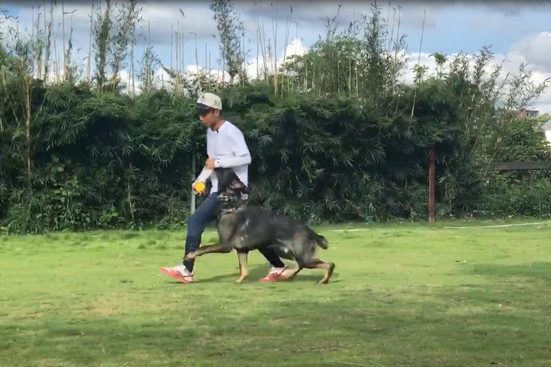 日常训犬训练视频(4)
