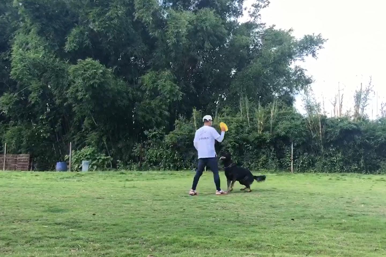日常训犬训练视频(8)