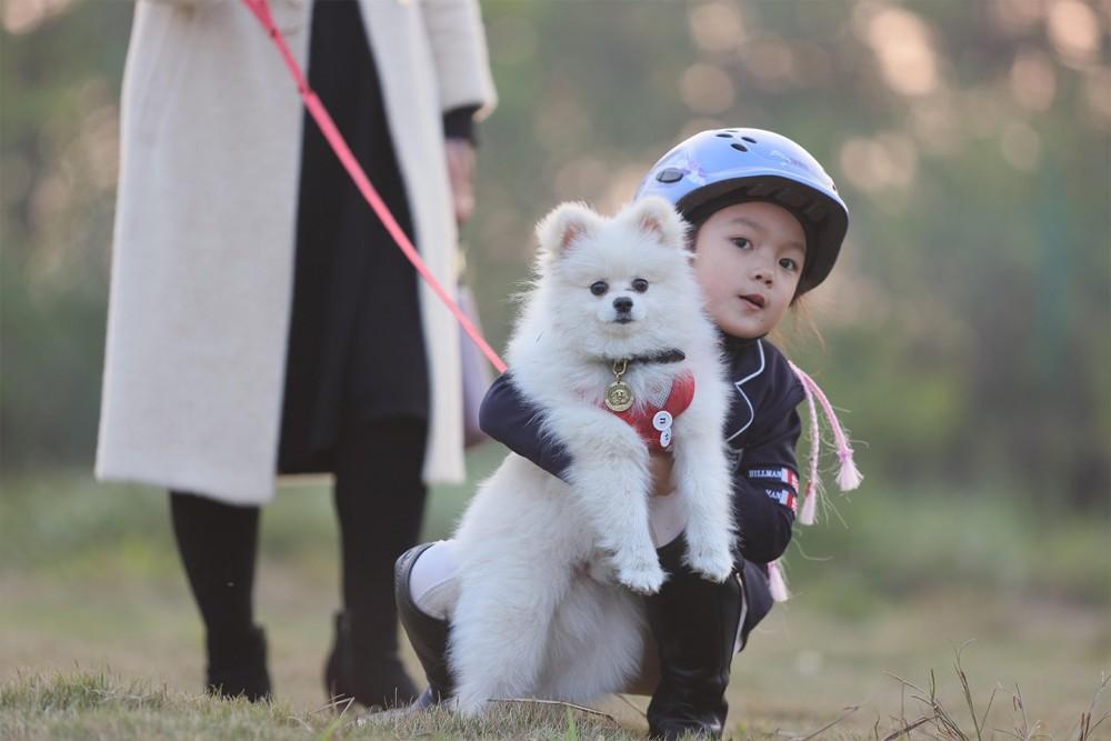 宠物狗训练